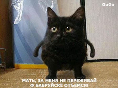 http://mediamobile.ucoz.ru/_ph/14/2/859541487.jpg